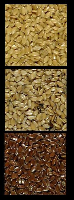 Taste differences between golden brown organic flaxseed, golden vs brown flax seed