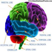 brain omega 3, nutrition and brain, flaxseed brain, the adhd brain, brain development omega 3