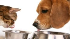 omega 3 for pets, flax for pets, omega 3 for dogs, flax for dogs, flax for cats