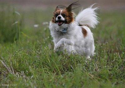 Flaxseed for Dogs, Flaxseed for Dogs, flaxseed for pets