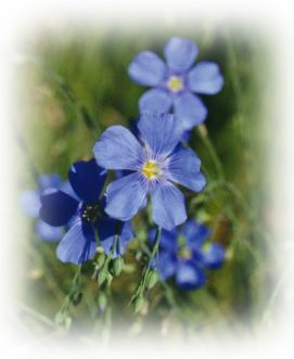 flax for diabetics, flax for diabetes, flaxseed benefits diabetes, flax diabetes