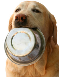 How Much Omega 3 For Your Dog And Cat Omega 3 Flaxseed