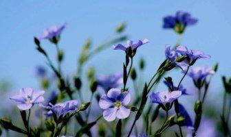 golden flax seed, flax seed, flax hull lignans, about ellie, gotflax.com